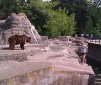 В Варшаве пьяный мужчина залез в вольер к медведице и… избил животное