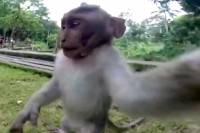 На Бали макака отобрала у туристки современную камеру, чтоб сделать селфи