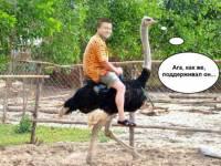Интернет взорвался фотожабами на Януковича, который поддерживает страусов