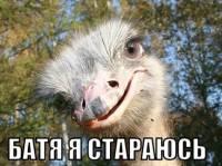 Не иссякает поток фотожаб на недавнее интервью Виктора Януковича