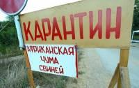 Из-за африканской чумы свиней на Черниговщине введен карантин