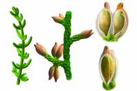 Ученые назвали родину древнейших цветов