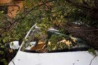 В центре Киева рухнувшее дерево помяло несколько машин, оборвало троллейбусные провода и заблокировало движение транспорта