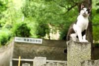 Британские ученые выяснили, почему кошка гуляет сама по себе