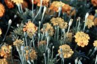 Ученые выяснили, как растения превращаются в «зомби»