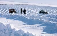 Звериный оскал аграрного капитализма