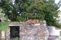 Можете не верить, но древнейшее дерево Великобритании... начало менять пол