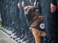 Интернет скорбит по служебному псу, убитому террористами в пригороде Парижа
