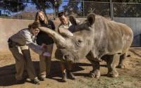 В американском зоопарке умер один из последних северных белых носорогов