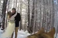 Собака сняла свадебное видео для своих хозяев