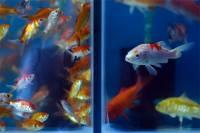 Ученые нашли у рыб признаки сознания