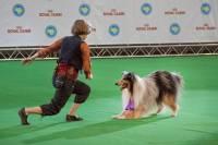 В столице Украины проведут сразу несколько Международных выставок собак всех пород