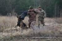 Луганские пограничники одели своих собак в бронежилеты