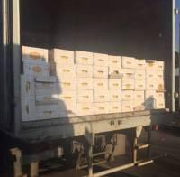 В Донецкой области задержали фуры с продуктами для боевиков