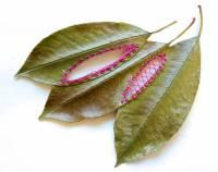 Если любишь вышивать, то сможешь делать это даже на листьях