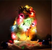 Куклачев просит не делать из кошек... новогодние елки