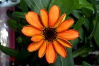 На МКС распустился первый в истории цветок