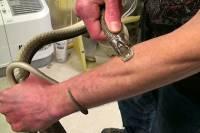 Чтобы создать вакцину, американец позволил ядовитым змеям укусить себя… более 160 раз