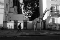 Фотограф представил, как выглядели бы дикие животные на улицах современного города