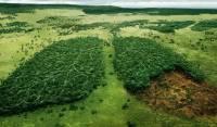В Албании запретили вырубать деревья в промышленных целях. Разве что для отопления