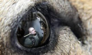 Ученые умудрились вырастить из стволовых клеток части глаза