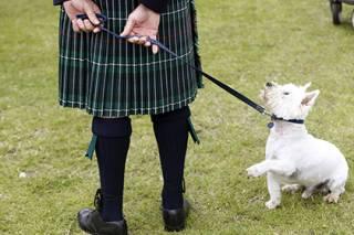 В Шотландии ищут собаку на должность... официального посла