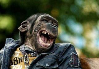 В Китае обезьяна забрала себе смартфон посетительницы зоопарка