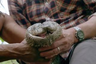 В джунглях Амазонки нашли самую длинную змею в мире