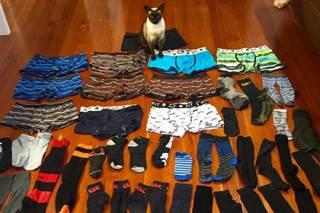 Новозеландский кот украл около 60 мужских трусов и пар носков