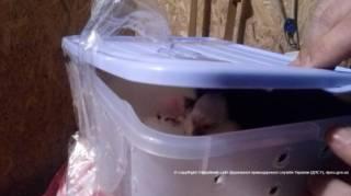 Луганские пограничники задержали шесть обезьян. Благо, без гранат