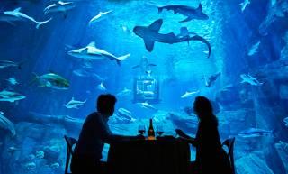 Влюбленным парам предложили провести романтический вечер в окружении акул