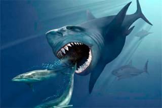 Ученые выяснили причину смерти крупнейшей акулы в истории планеты