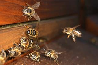 У итальянского пасечника украли... миллион пчел