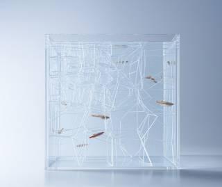 Перед вами одни из самых современных аквариумов в мире
