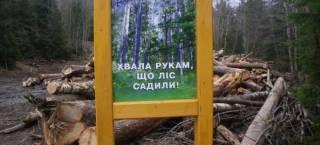Москаль решил разобраться с теневыми схемами экспорта леса