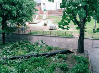 Разубшевавшаяся стихия стоила Харькову 120 деревьев. И то ли еще будет
