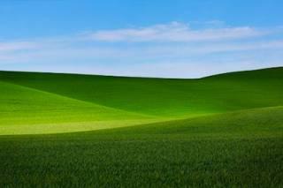 Китаец случайно сфотографировал в живой природе обои с рабочего стола Windows XP