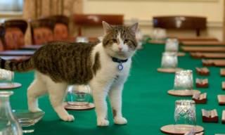 В Великобритании меняются премьер-министры, а коты – остаются