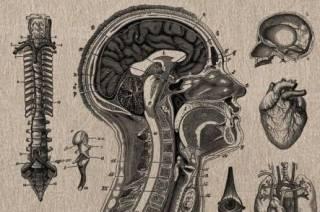 Новинки научпопа: физика на чердаке, упразднят ли таблицу умножения и как поссорились Комаровский с Жириновским