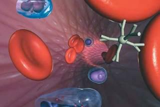 Гепатит уже «сидит в печенках»