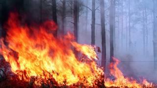 В Калифорнии бушуют лесные пожары. Сгорели около 200 домов