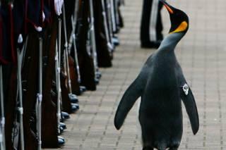 Шотландский пингвин стал генералом Королевской гвардии Норвегии