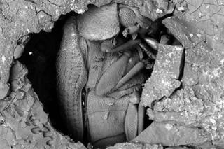 Ученые установили, что в египетских гробницах хорошо сохранялись не только фараоны