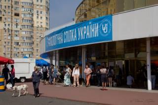 КСУ проведет в Киеве сразу несколько международных выставок собак. Уже завтра