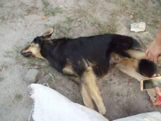 Неизвестные живодеры расстреляли собак в районе метро «Славутич». Соцсети в шоке
