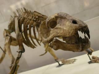 Биологи узнали, кто погибнет первым во время шестого массового вымирания