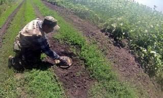 На Донбассе местные жители минируют свои участки, спасаясь от мародеров