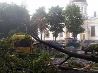 Скончалась одесситка, на которую упало дерево