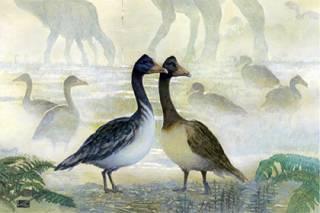 Ученые опровергли один из главных мифов о динозаврах