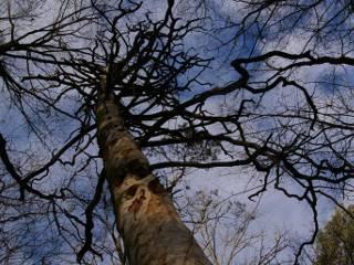Исчезающие леса Украины: помочь нельзя мешать